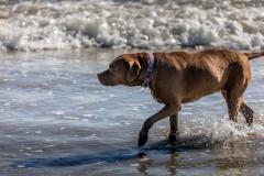 Malibu Dog Beach
